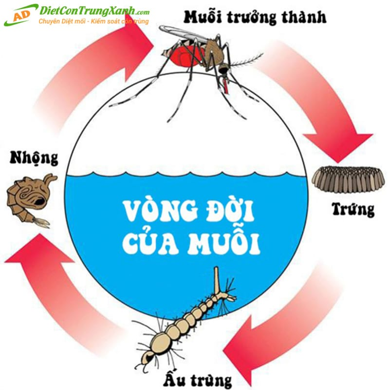 Vong-doi-cua-loai-muoi