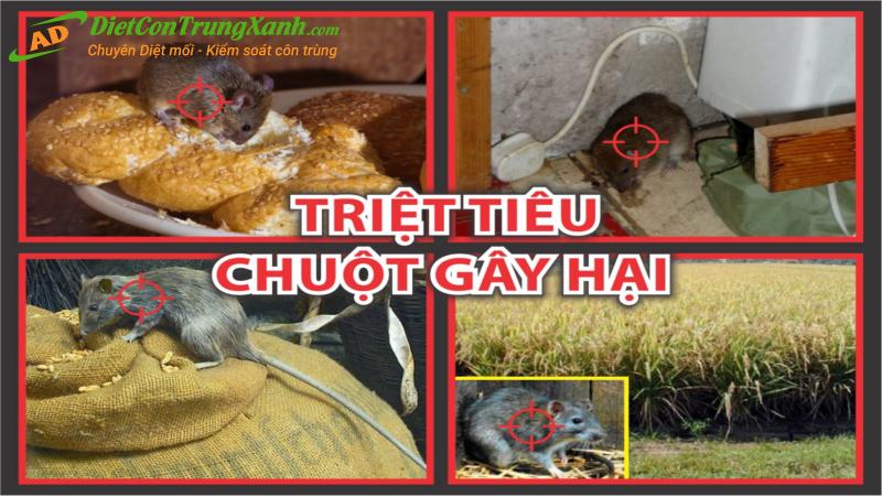 Noi-dat-thuoc-diet-chuot