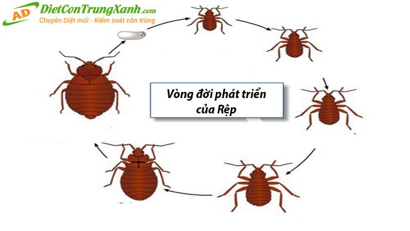 Vong-doi-loai-rep