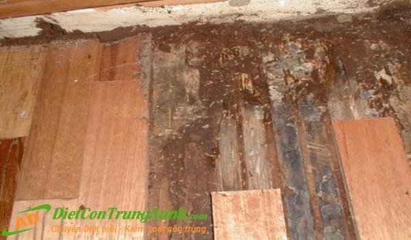 Cách diệt mối sàn gỗ tốt nhất ngay tại nhà dành cho bạn