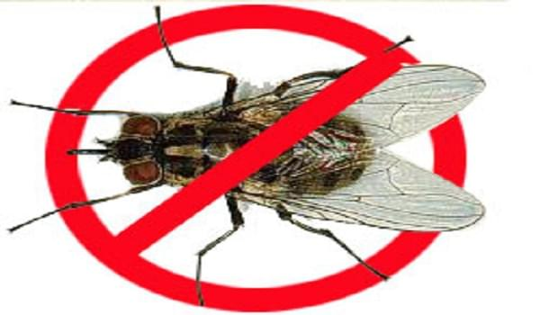Cách diệt ruồi an toàn và hiệu quả không phải ai cũng biết