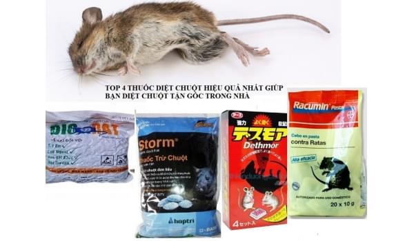 Có nên sử dụng thuốc diệt chuột
