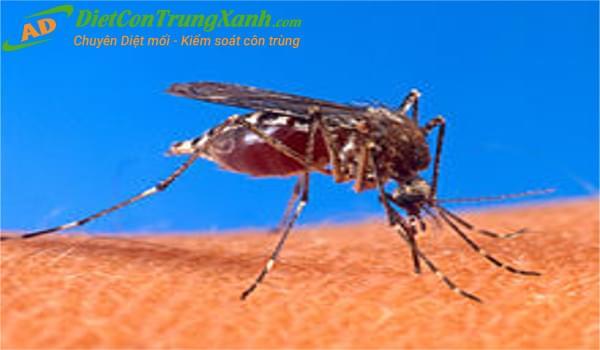 Đặc điểm sinh học loài muỗi