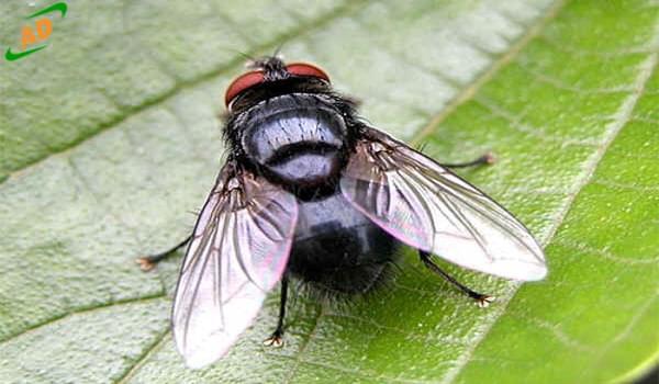 Đặc điểm sinh học và tập tính sinh học các loại côn trùng (P 2)