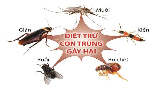 Dịch vụ diệt côn trùng tại Ánh Dương Hà Nội
