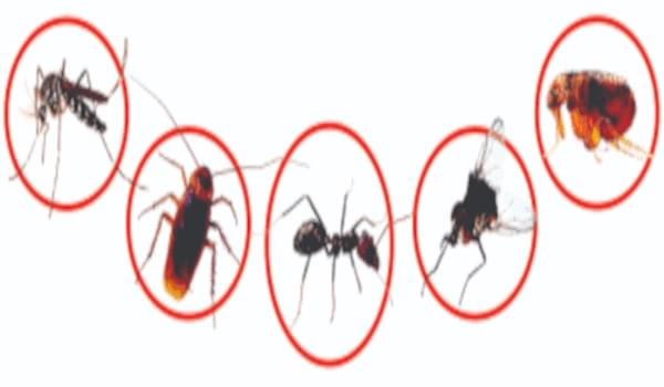 Dịch vụ kiểm soát côn trùng - Diệt tận gốc loài côn trùng gây hại