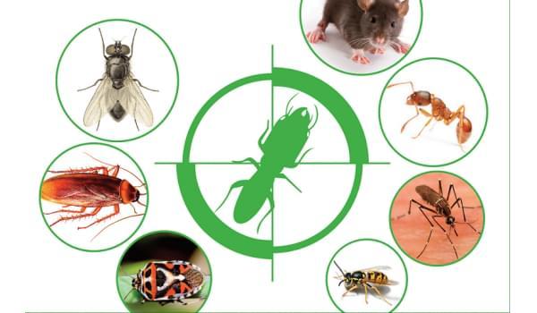 Dịch vụ kiểm soát côn trùng gây hại tại kho doanh nghiệp