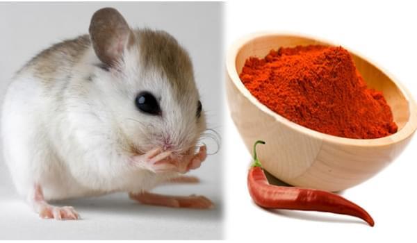 Đuổi chuột bằng phương pháp tự nhiên