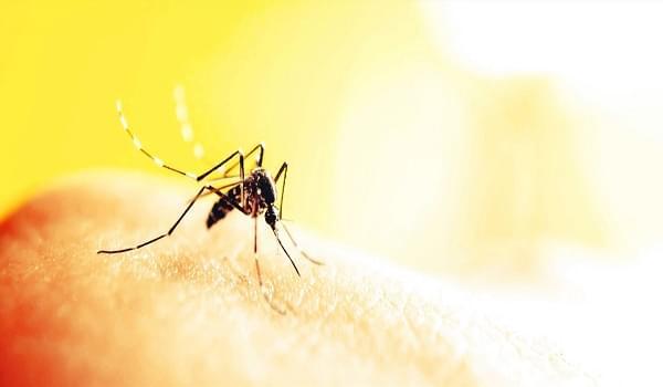 Hướng dẫn làm tinh dầu xả chống muỗi an toàn
