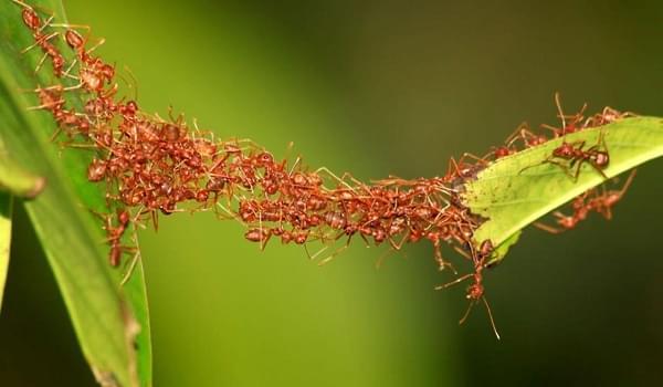 Kĩ thuật quan sát tìm tổ kiến trong nhà
