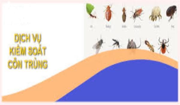 Mách bạn địa chỉ cung cấp dịch vụ kiểm soát côn trùng tốt nhất