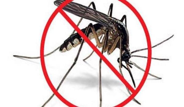 Mua thuốc diệt muỗi tại đâu tốt