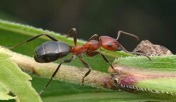 Những loại kiến nào thường xuất hiện trong bếp nhà bạn