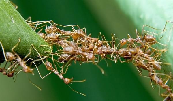 Những mẹo nhỏ trong việc phòng ngừa kiến trên cây cảnh