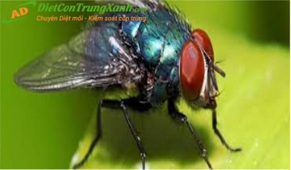 Quy trình và phương pháp dịch vụ diệt ruồi