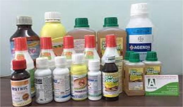 Top 3 loại thuốc diệt mối mang lại hiệu quả 100%